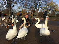 At the park in London.Soon we were surrounded by swans!