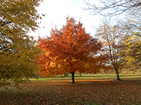 The autumn foliage was so beautiful in London in November.